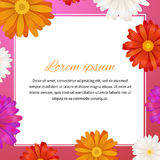 Beauty template with gerbera flowers and text space, square illustration Royalty Free Stock Photos