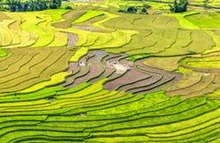 Beauty of terraced fields harvest season Stock Photography