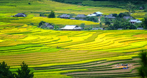 Beauty of terraced fields Tu Le, Yen Bai, Vietnam Royalty Free Stock Photos