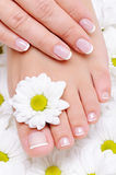 Beauty treatment for female hands and feets Stock Image