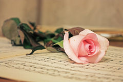 Beauty treatment-pink rose and candle Stock Images