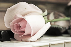 Beauty treatment-pink rose and candle Royalty Free Stock Images