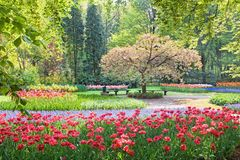 Beauty tree in bloom with bench stock images