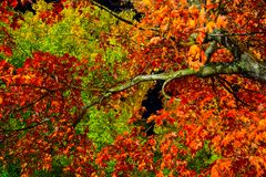 Autumn red, yellow, green trees royalty free stock image