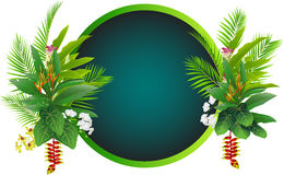 Beauty tropical flowers and plants background Royalty Free Stock Photos