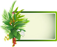 Beauty tropical flowers and plants background Royalty Free Stock Images