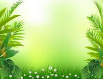 Beauty tropical forest background Royalty Free Stock Images