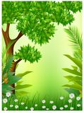 Beauty tropical forestbackground Royalty Free Stock Photos