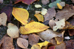 Beauty underfoot. Autumn leaves on the footpath Stock Photo