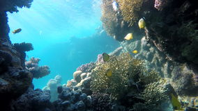 The beauty of the underwater world. stock video