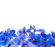 Beauty violet flowers Stock Images