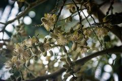 Areca nut flower stock image