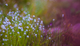 The beauty of the wild flowers Royalty Free Stock Photo