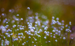 The beauty of the wild flowers Stock Images