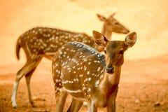 Beauty of wild Royalty Free Stock Image