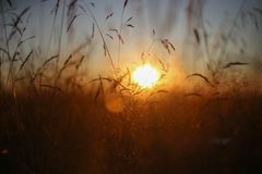 A warm sunset in the Russian fields Royalty Free Stock Image