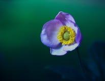 Beauty wildflower at night Royalty Free Stock Photos
