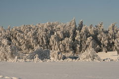 Beauty of the winter. Snow cover the village, frozen trees and bushes Royalty Free Stock Photo