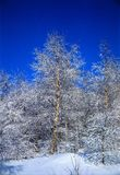 Beauty of winter. Illustrations,snow landscapes royalty free stock images