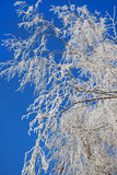 Beauty of winter Stock Photography