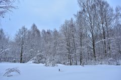 The beauty of the winter forest although in winter there are no such colors as in other seasons of the year. But it also has its charm, which we look with stock photography