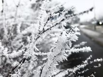 Frost. Beauty of winter Stock Photos