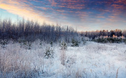 Beauty winter landscape in morning Royalty Free Stock Photos