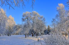 Beauty of winter nature in snowy park at sunrise Royalty Free Stock Photos