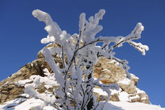 The beauty of winter. Snow covered tree branch under a rock Stock Photography