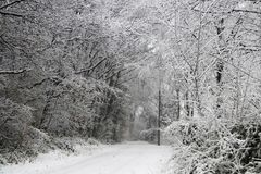 Forest road during heavy snowfall makes everything white in a short time Royalty Free Stock Photos