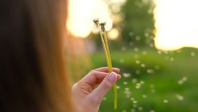 Beauty woman blowing dandelion against the sunset, back view. Beauty young woman blowing white dandelion against the sunset, back view stock video footage