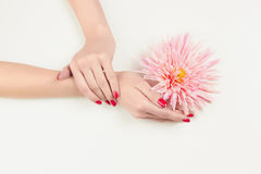 Beauty Woman hand with pink flower Royalty Free Stock Photos