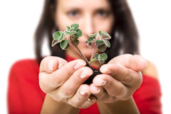 Beauty woman holding young plant Royalty Free Stock Photo