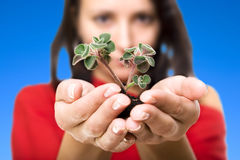 Beauty woman holding young plant. The woman observes cultivation of a young plant royalty free stock image