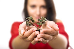 Beauty woman holding young plant Stock Photos