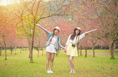 Beauty women open arms enjoyment pink flower. Young asian girlfriends enjoying sightseeing blooming cherry blossom at sakura avenue in japan. Beauty korean women Royalty Free Stock Images