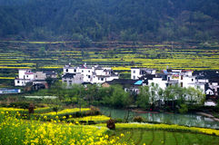 The beauty of the wuyuan Royalty Free Stock Images