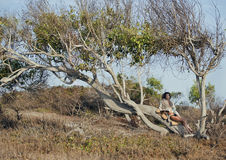 Beauty young woman in savanna walking, dreaming Royalty Free Stock Photos