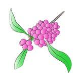 Beautyberry Στοκ φωτογραφία με δικαίωμα ελεύθερης χρήσης