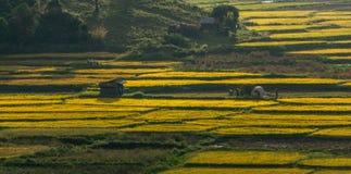 Beautyful光和米领域和Th mountai的颜色在DonDuong- LamDong-越南 免版税库存图片