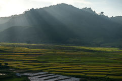 Beautyful光和米领域和Th mountai的颜色在DonDuong- LamDong-越南 免版税库存照片