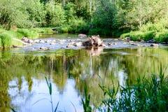 beautyful φως πρωινού πέρα από το δασικό ποταμό Στοκ εικόνα με δικαίωμα ελεύθερης χρήσης