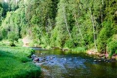beautyful φως πρωινού πέρα από το δασικό ποταμό Στοκ εικόνες με δικαίωμα ελεύθερης χρήσης