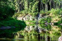 beautyful φως πρωινού πέρα από το δασικό ποταμό Στοκ Φωτογραφίες
