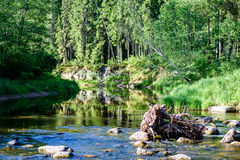 beautyful φως πρωινού πέρα από το δασικό ποταμό Στοκ Εικόνες