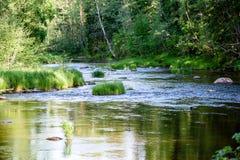 beautyful φως πρωινού πέρα από το δασικό ποταμό Στοκ Εικόνα