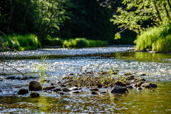 beautyful φως πρωινού πέρα από το δασικό ποταμό Στοκ φωτογραφία με δικαίωμα ελεύθερης χρήσης