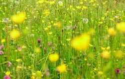 Beautyful blooming flowers bakcground. An alpine meadow in springtime. Beautyful blooming flowers on a meadow in spring. Blooming background Stock Images
