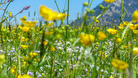 Beautyful blooming flowers on a meadow in springtime. Beautyful blooming flowers on a meadow in spring. Blooming background Stock Images