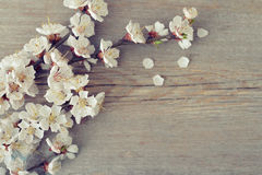 Beautyful blossom branch Stock Image